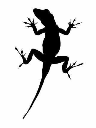 Lizard image linchpin istock